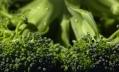 Эксперты выяснили, много ли витамина С в замороженной брокколи