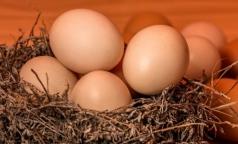 Эксперты рассказали, чем перепелиные яйца «проигрывают» в пользе куриным