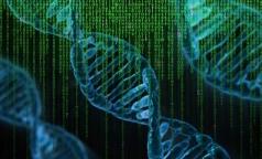 Ученые Гамбурга обследуют петебурженку, чтобы выяснить — излечилась ли она от ВИЧ, как «берлинский пациент»