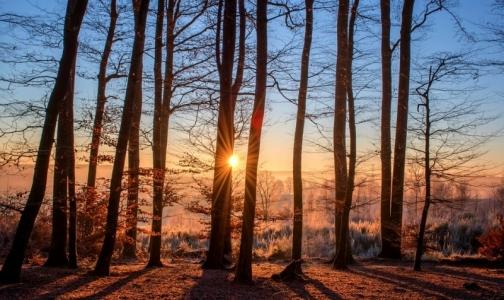 Тепло разбудило клещей — в выходные от них пострадали 5 петербуржцев