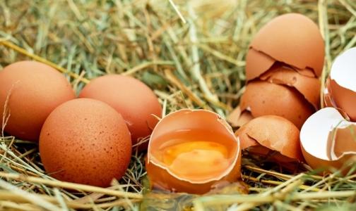 Накануне Пасхи эксперты не нашли на прилавках высококачественных яиц