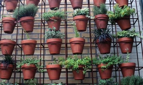 Как комнатные растения очищают воздух в офисе и в квартире