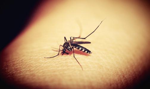С начала года от лихорадки денге в Бразилии погибли 300 человек. Туристам советуют быть осторожными
