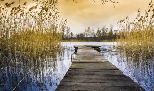 В Петербурге нет пригодных для купания водоёмов. В Ленобласти их много