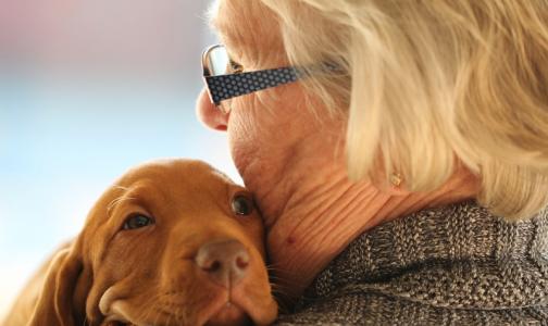 Перелом бедра у пожилых будут лечить быстрее, чтобы снизить смертность