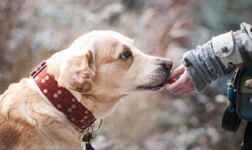Лучший друг: собаки будут помогать пациентам восстанавливаться после тяжелых операций