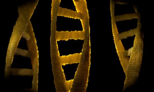 «Кому и зачем нужны генетические исследования?»  Круглый стол «Фонтанки.ру» и «Доктор Питер» уже 15 июля