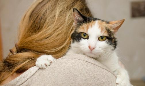 Московские ученые заподозрили связь между развитием шизофрении и кошками