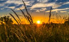 8 проблем со здоровьем, которые финны предлагают лечить травами