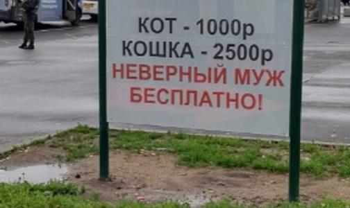 Петербургскую ветклинику накажут за предложение бесплатно кастрировать неверного мужа