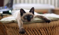 Кот вместо психолога: врачи рассказали о лечебном эффекте мурлыканья