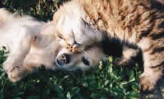 Ученые: домашние животные помогают избавиться от хронической боли