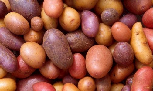 Четыре человека погибли от отравления парами гнилой картошки