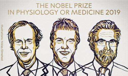 Нобелевскую премию по медицине получили ученые за исследования реакции клеток на кислород
