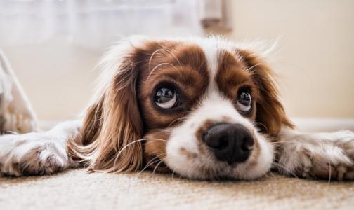 Ученые: Собаки защищают одиноких хозяев от преждевременной смерти
