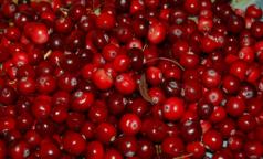 Генетики СПбГУ: Мы давно едим ГМО-продукты, природа их «придумала» задолго до человека