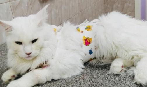 Ветеринары: «Прилипалы» и «стиратели» - игрушки, способные убить кошку