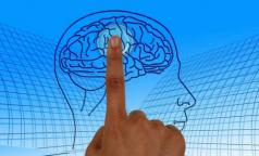 Татьяна Черниговская: Большинство «научпопа» о мозге на ТВ и в интернете — фейк