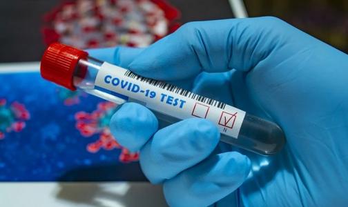 По 500, но без гарантии. Как в Петербурге торгуют фальшивыми отрицательными тестами на коронавирус