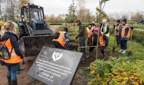 В память о погибших от коронавируса медиках в саду Прометей посадили краснолистные клены